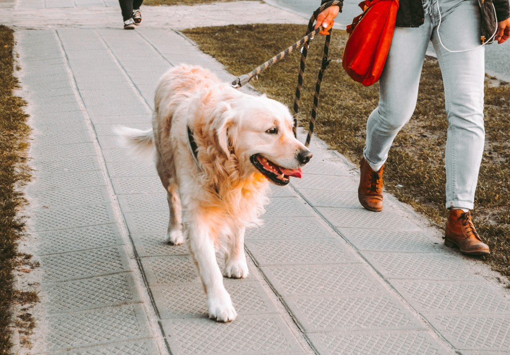 Take a dog for a walk to boost your physical activity